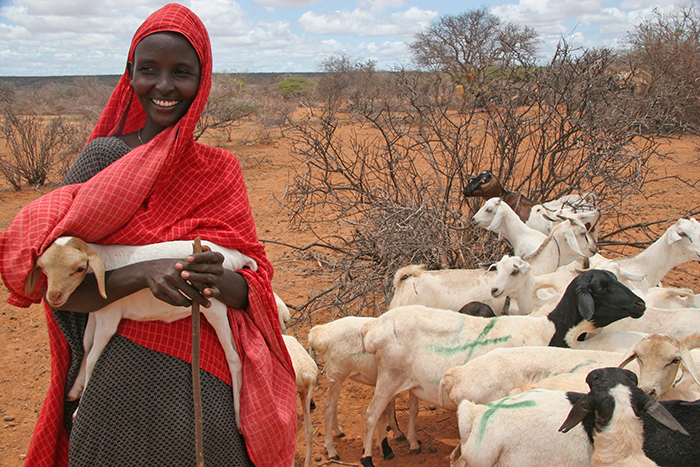Goats for development in Somalia