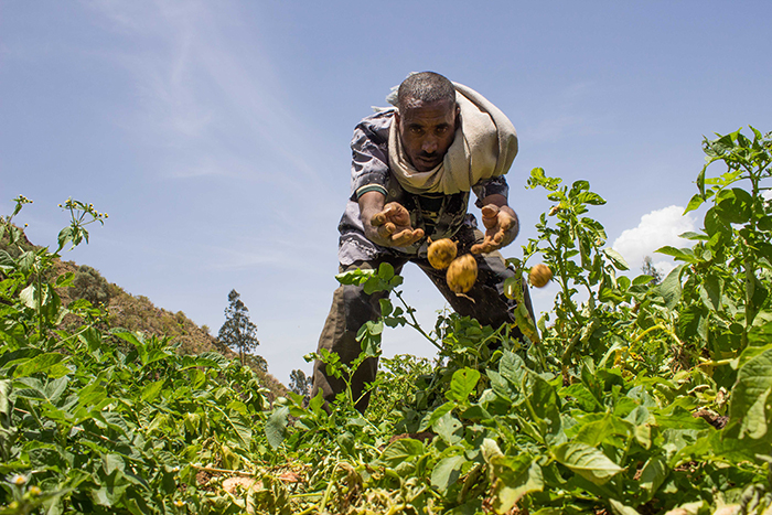 Romha Atsbeha, a farmer in Addis Alem Locality, Samre District Tigray has been able to harvest twice a year after receiving a water pump from an NCA supported livelihood project. Previously he depended on the rain to produce crops. Photo: Hilina Abebe/Norwegian Church Aid, Ethiopia